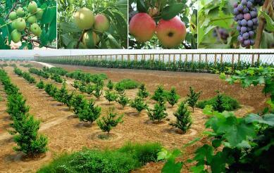 在绿色发展中做强现代农业